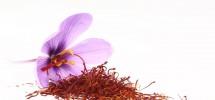 Kwiat szafranu olej